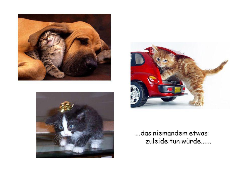 ...vom harmlosen, süssen Kätzchen...