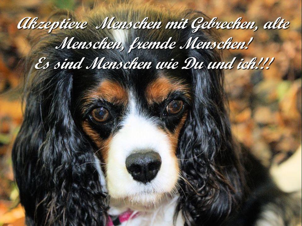 - Mein Sohn, ich hoffe nur, dass die anderen vier Hunde auch einen Besitzer wie Dich finden!!! Moral der Geschichte: Im Leben ist nicht wichtig wie wi