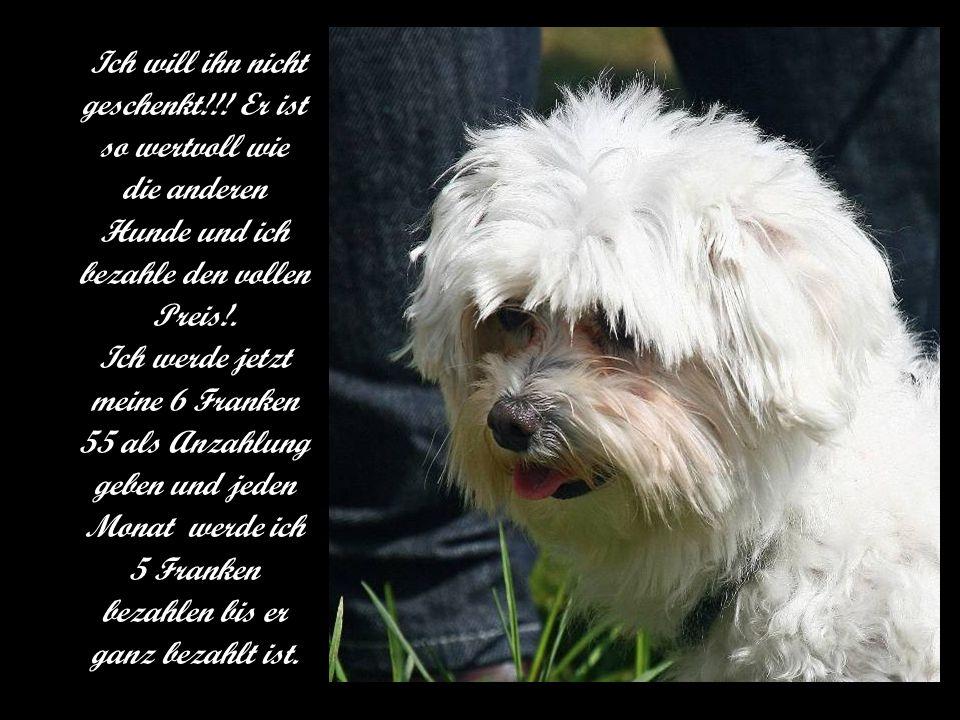 Mit Emotion in der Stimme sagte der Junge: - Diesen Hund will ich kaufen! Der Besitzer des Geschäftes antwortete gutmütig: - Nein, diesen Hund wirst D