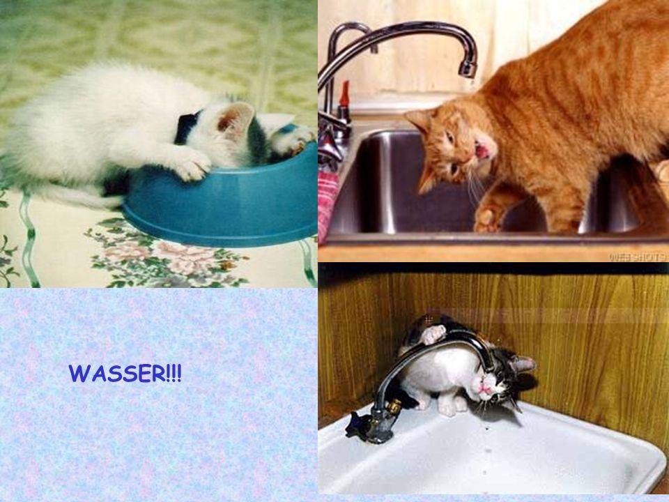WASSER!!!