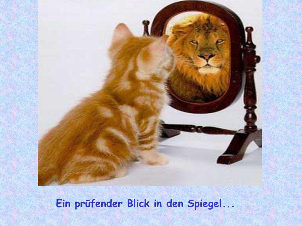 Ein prüfender Blick in den Spiegel...