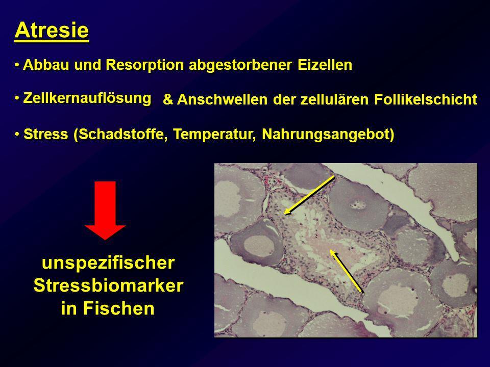 Atresie Abbau und Resorption abgestorbener Eizellen Stress (Schadstoffe, Temperatur, Nahrungsangebot) unspezifischer Stressbiomarker in Fischen Zellke