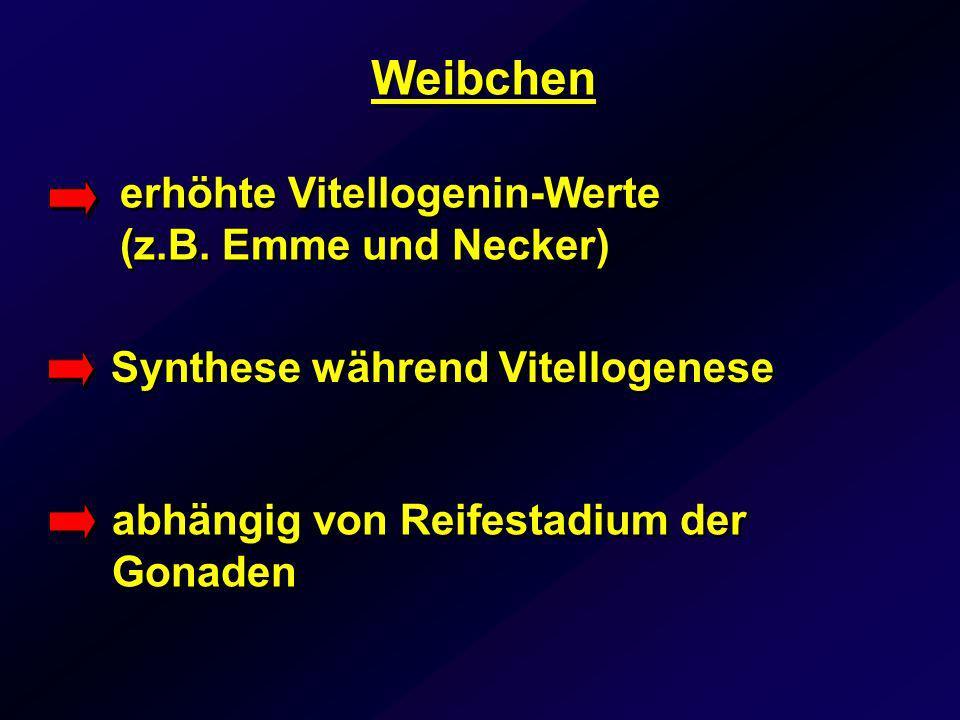 Weibchen Synthese während Vitellogenese erhöhte Vitellogenin-Werte (z.B. Emme und Necker) abhängig von Reifestadium der Gonaden
