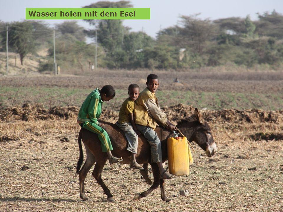 6 Spendenprojekt der Schülerarbeit für Äthiopien: Hilfe für Straßenkinder in Adwa Wolfgang Ilg / Fritz Leng März 2014 Wasser holen mit dem Esel