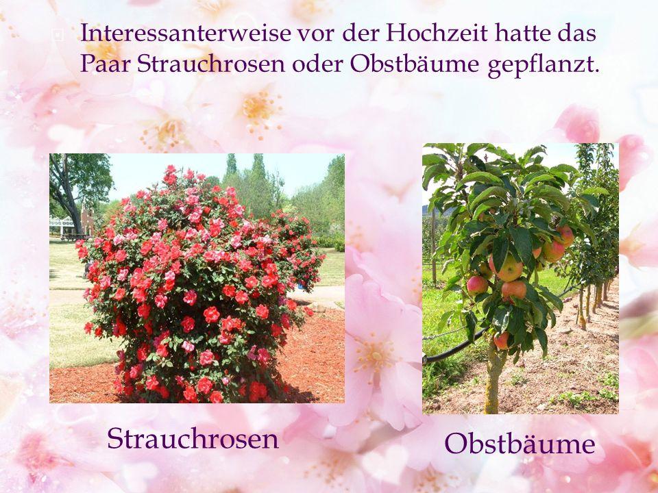 Interessanterweise vor der Hochzeit hatte das Paar Strauchrosen oder Obstbäume gepflanzt.