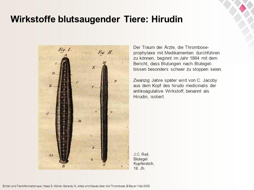 Bilder und Textinformation aus: Haas S, Müller-Gerardy G, Altes und Neues über die Thrombose, © Bayer Vital 2008 Wirkstoffe blutsaugender Tiere: Hirud