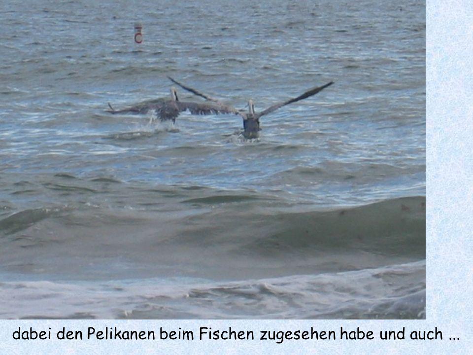 dabei den Pelikanen beim Fischen zugesehen habe und auch...
