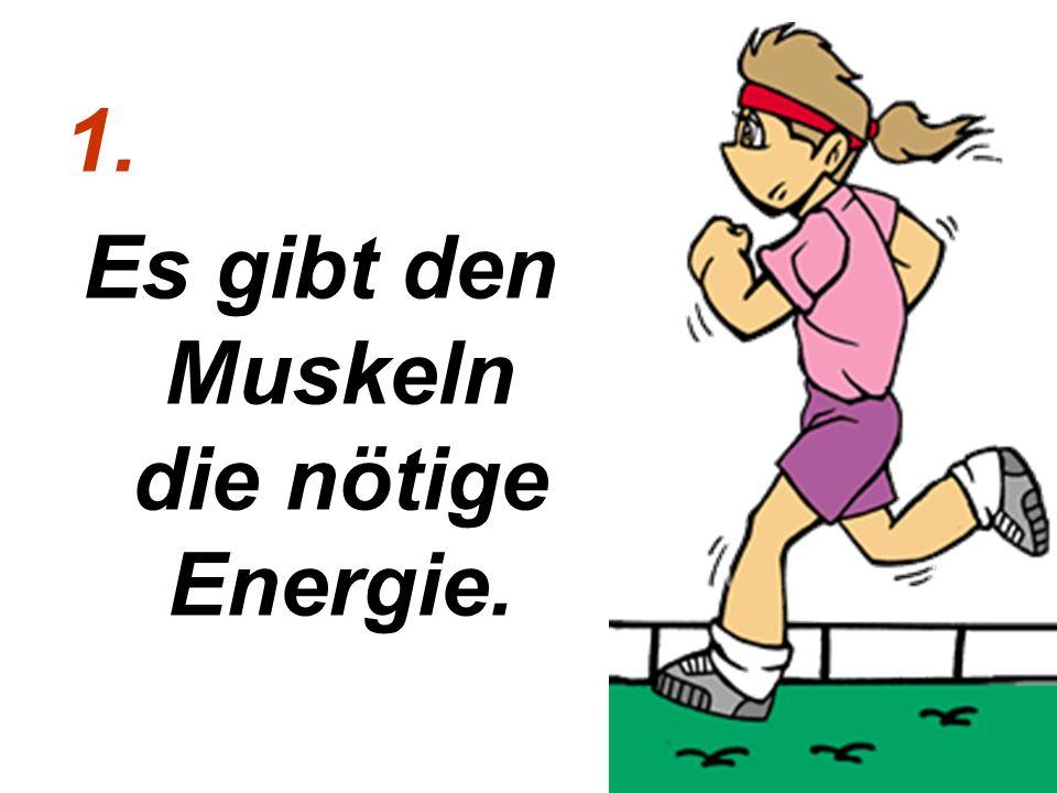 1. Es gibt den Muskeln die nötige Energie.