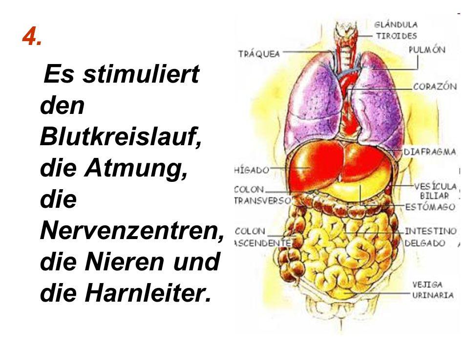 4. Es stimuliert den Blutkreislauf, die Atmung, die Nervenzentren, die Nieren und die Harnleiter.