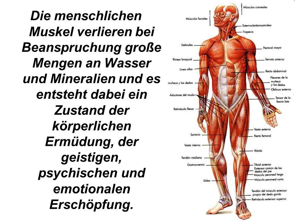 Die menschlichen Muskel verlieren bei Beanspruchung große Mengen an Wasser und Mineralien und es entsteht dabei ein Zustand der körperlichen Ermüdung,