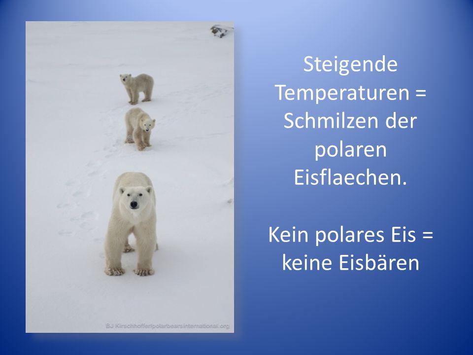 Steigende Temperaturen = Schmilzen der polaren Eisflaechen. Kein polares Eis = keine Eisbären