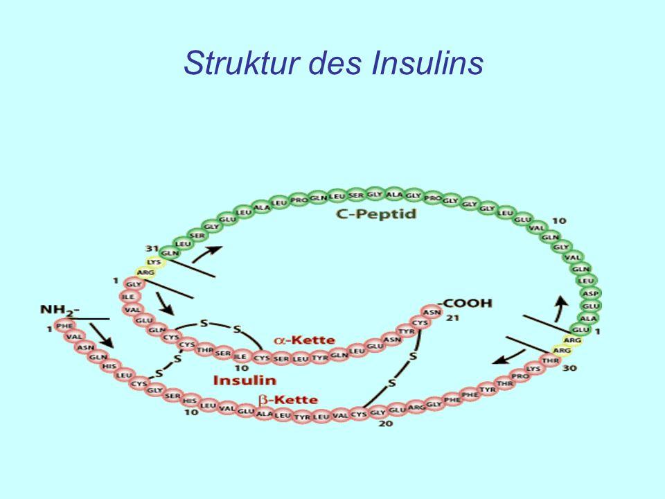 Struktur des Insulins