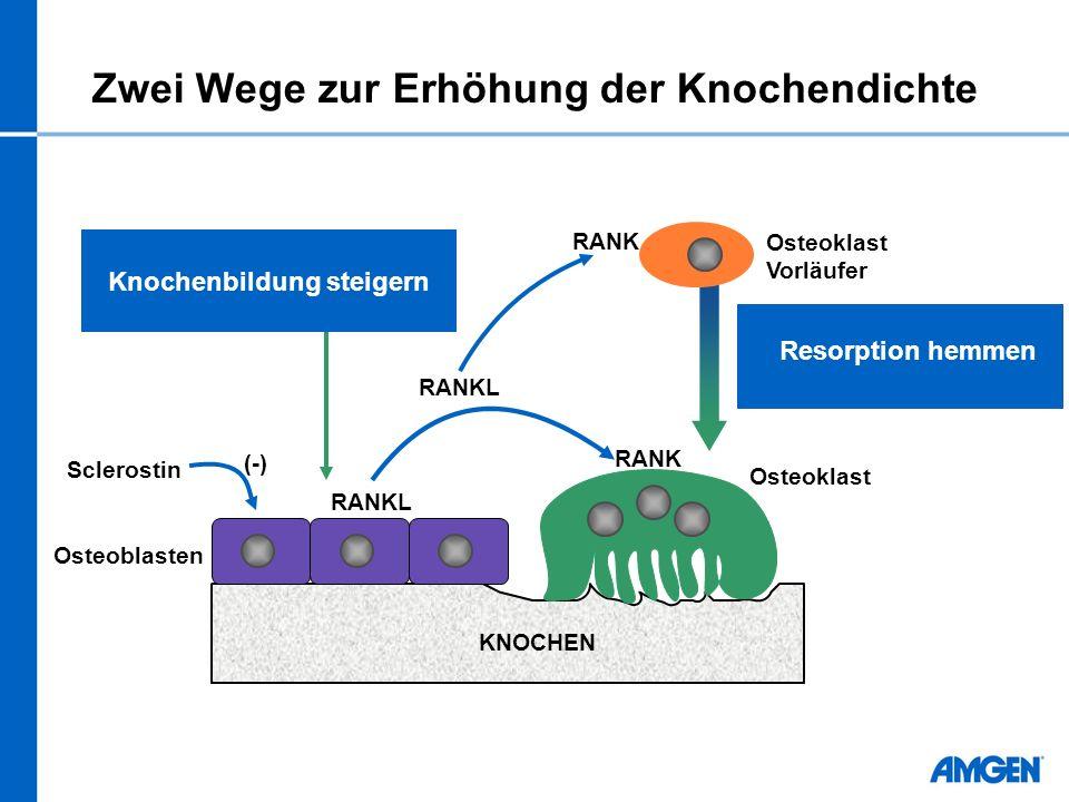 Zwei Wege zur Erhöhung der Knochendichte RANKL KNOCHEN Osteoblasten Osteoklast Vorläufer RANK RANKL RANK Resorption hemmen Knochenbildung steigern Sclerostin (-)