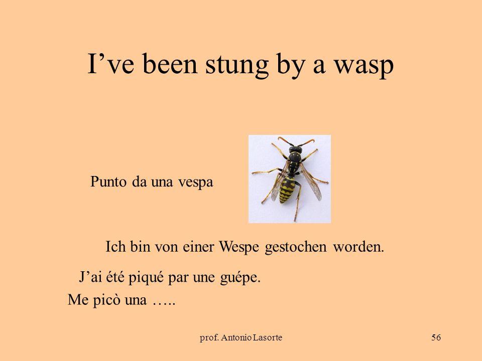 prof. Antonio Lasorte56 Ive been stung by a wasp Ich bin von einer Wespe gestochen worden. Punto da una vespa Jai été piqué par une guépe. Me picò una