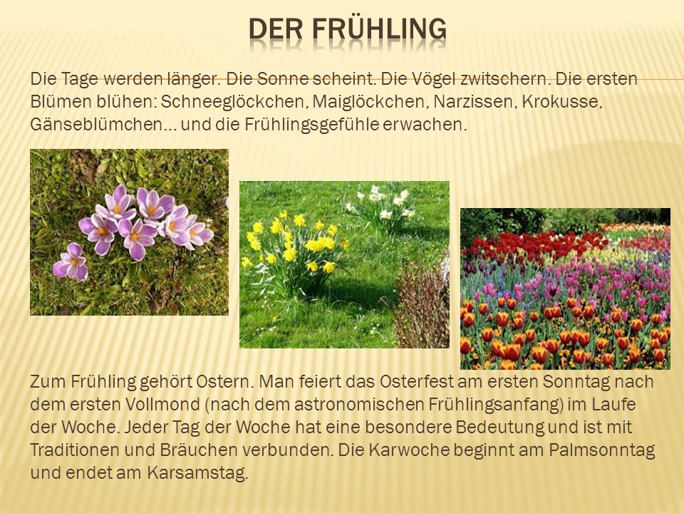 Die Tage werden länger. Die Sonne scheint. Die Vögel zwitschern. Die ersten Blümen blühen: Schneeglöckchen, Maiglöckchen, Narzissen, Krokusse, Gänsebl