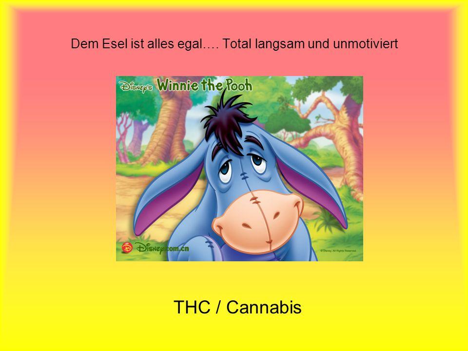 Dem Esel ist alles egal…. Total langsam und unmotiviert THC / Cannabis