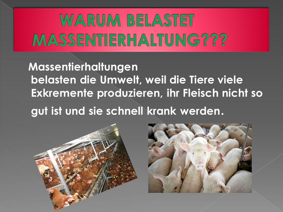 Massentierhaltungen belasten die Umwelt, weil die Tiere viele Exkremente produzieren, ihr Fleisch nicht so gut ist und sie schnell krank werden.