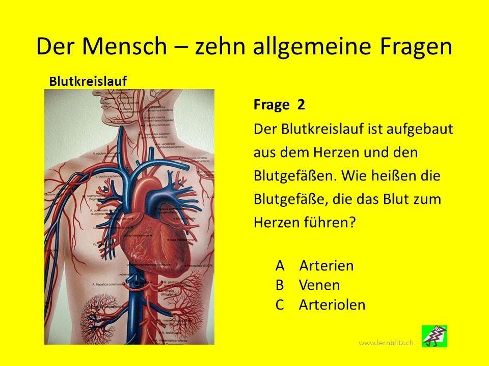 Der Mensch – zehn allgemeine Fragen Inneres Organ Frage 3 Auf dieser Aufnahme ist ein Organ abgebildet, das im Körper doppelt vorkommt.
