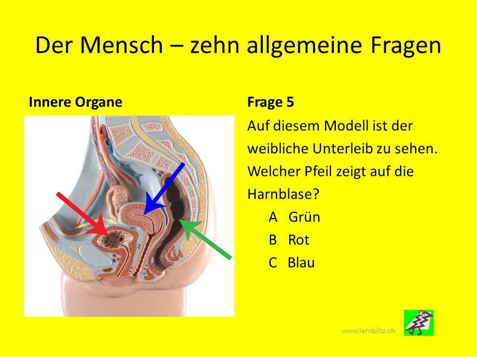 Der Mensch – zehn allgemeine Fragen MuskelnFrage 6 Wo befindet sich der kleinste Muskel des Menschen .