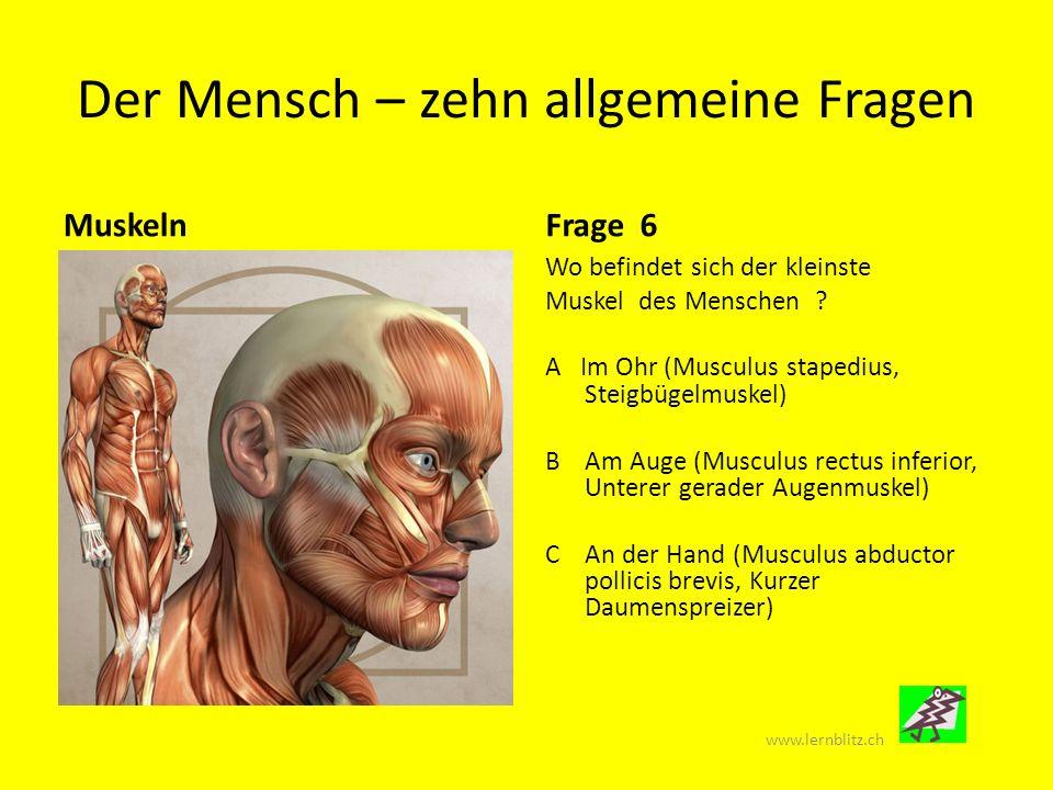 Der Mensch – zehn allgemeine Fragen VerdauungsorganeFrage 7 Auf diesem Bild ist der Magen- Darm-Trakt des Menschen dargestellt.