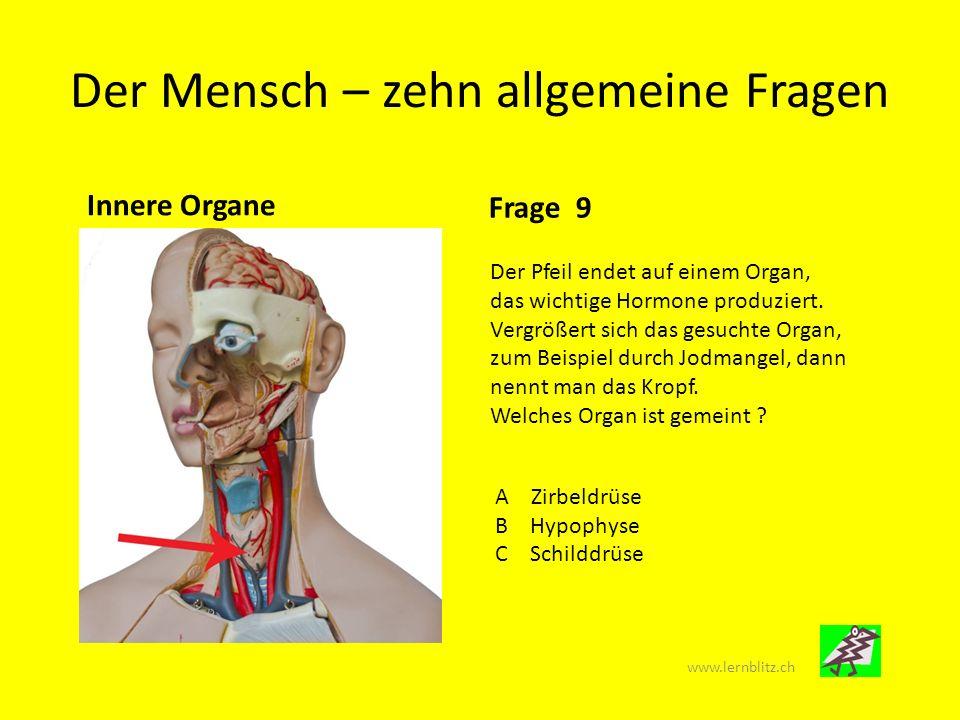 Der Mensch – zehn allgemeine Fragen Innere Organe Frage 10 Die hier abgebildeten Organe sind gewiss bekannt : Es sind die Lungen.