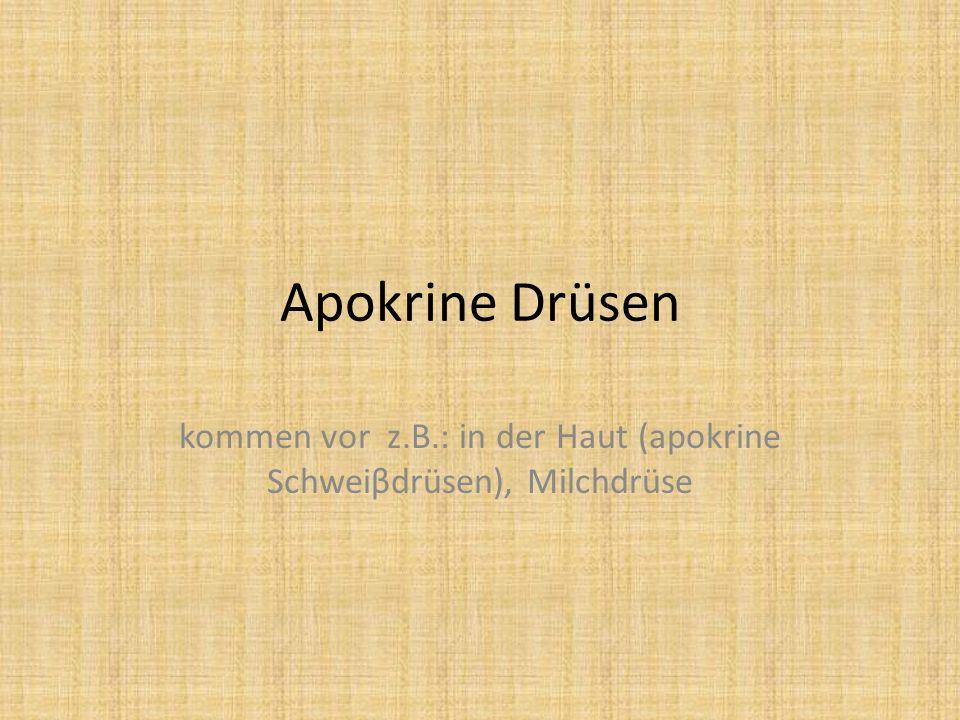Apokrine Drüsen kommen vor z.B.: in der Haut (apokrine Schweiβdrüsen), Milchdrüse