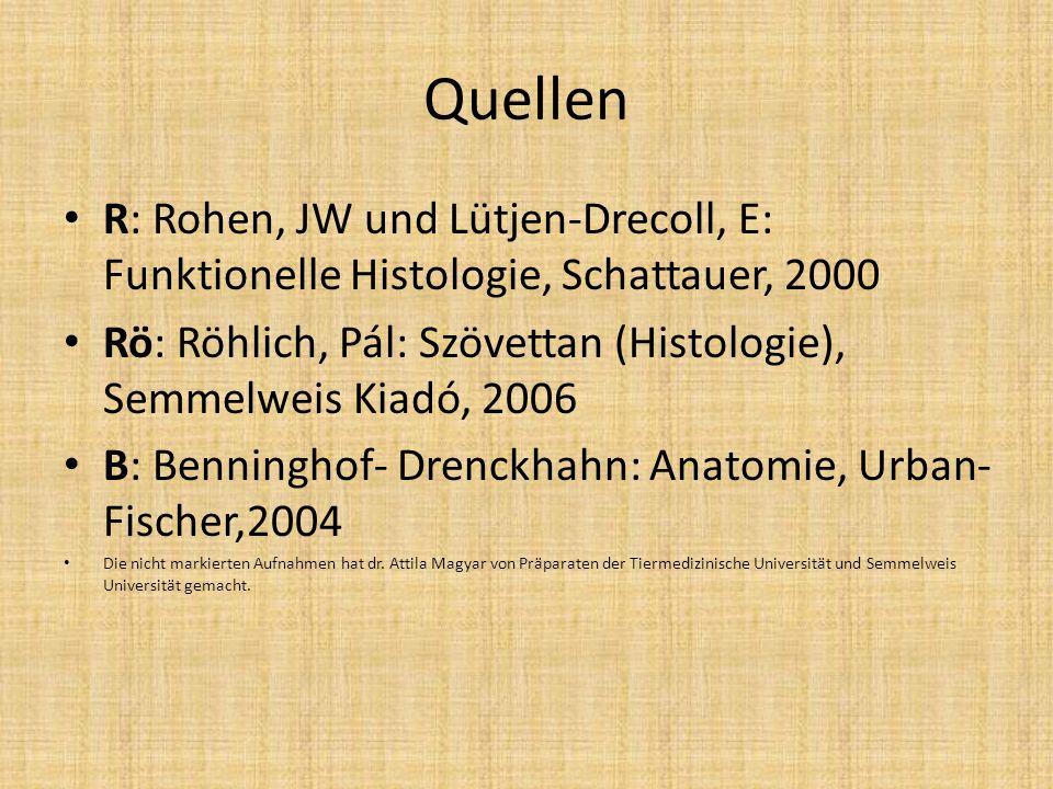 Quellen R: Rohen, JW und Lütjen-Drecoll, E: Funktionelle Histologie, Schattauer, 2000 Rö: Röhlich, Pál: Szövettan (Histologie), Semmelweis Kiadó, 2006