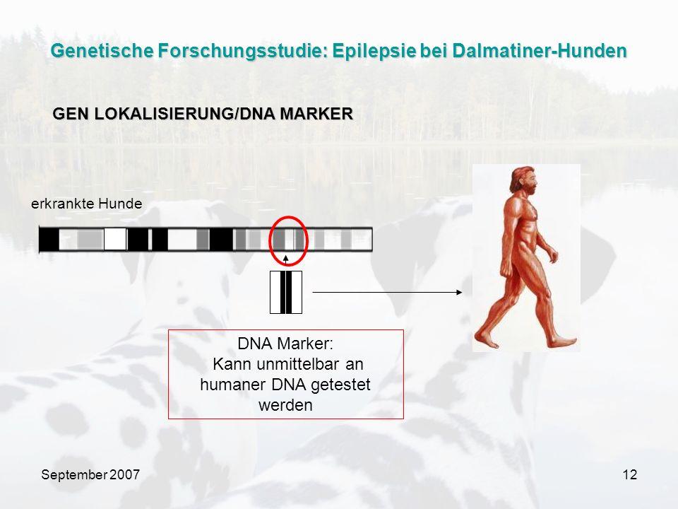 September 200712 erkrankte Hunde DNA Marker: Kann unmittelbar an humaner DNA getestet werden GEN LOKALISIERUNG/DNA MARKER Genetische Forschungsstudie: