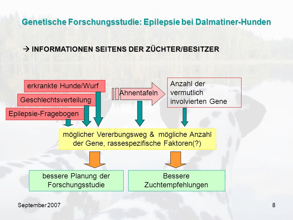 September 20078 erkrankte Hunde/Wurf Geschlechtsverteilung Ahnentafeln möglicher Vererbungsweg & mögliche Anzahl der Gene, rassespezifische Faktoren(?) Anzahl der vermutlich involvierten Gene Bessere Zuchtempfehlungen bessere Planung der Forschungsstudie Epilepsie-Fragebogen INFORMATIONEN SEITENS DER ZÜCHTER/BESITZER INFORMATIONEN SEITENS DER ZÜCHTER/BESITZER Genetische Forschungsstudie: Epilepsie bei Dalmatiner-Hunden