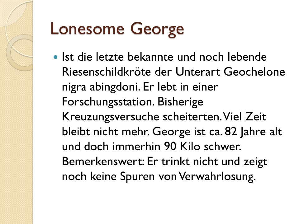 Ist die letzte bekannte und noch lebende Riesenschildkröte der Unterart Geochelone nigra abingdoni.