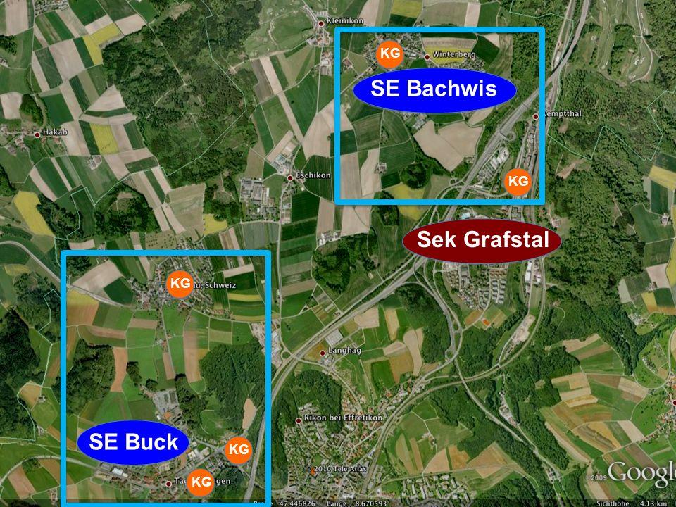 SE Buck SE Bachwis Sek Grafstal KG