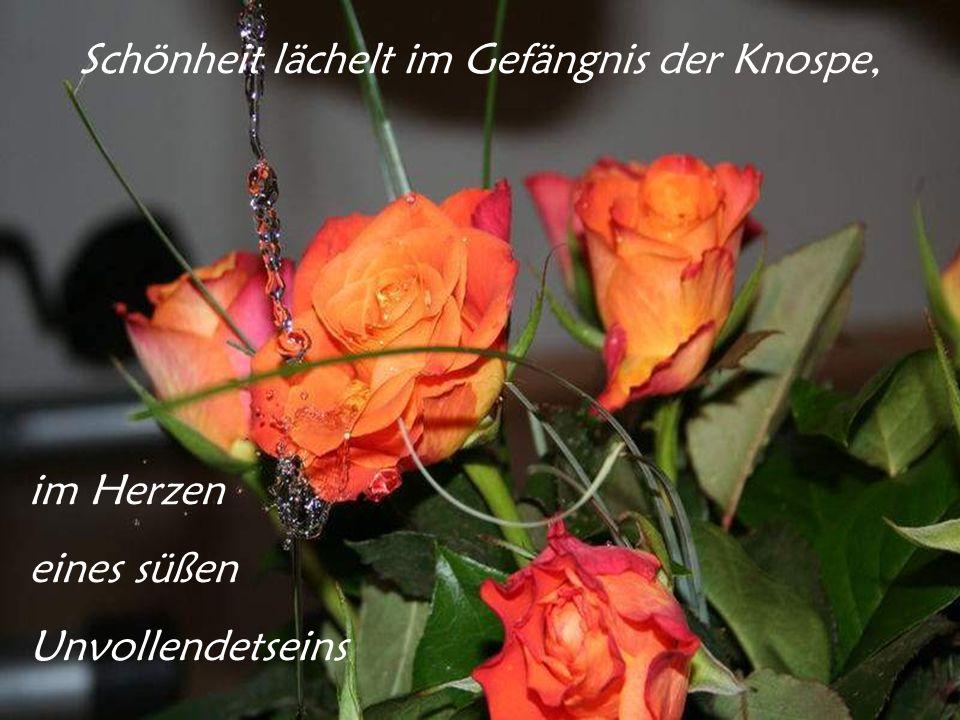 Jede neuerblühte Rose bringt einen Gruß von der Rose des ewigen Frühlings: Gott ehrt mich, wenn ich arbeite; er liebt mich, wenn ich singe