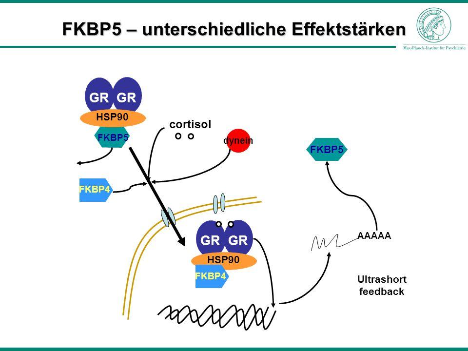 FKBP5 – unterschiedliche Effektstärken FKBP4 GR FKBP5 HSP90 dynein cortisol GR HSP90 FKBP4 AAAAA FKBP5 Ultrashort feedback