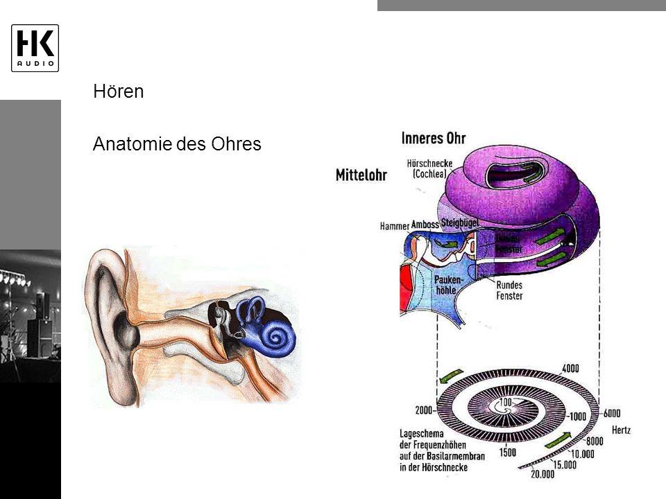 Anatomie des Ohres Hören