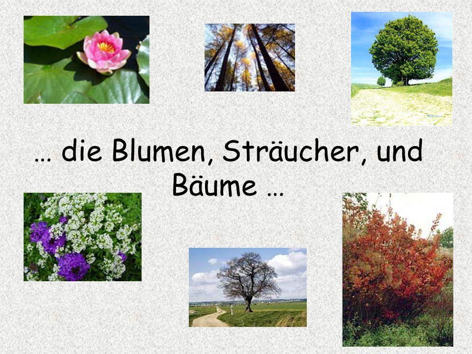 … die Blumen, Sträucher, und Bäume …