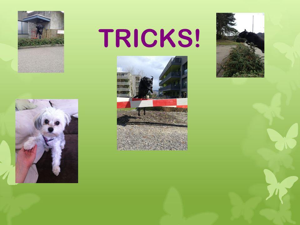 ÜBER TRICKS.Es gibt sehr viele Tricks die man am Hund bei bringen kann.