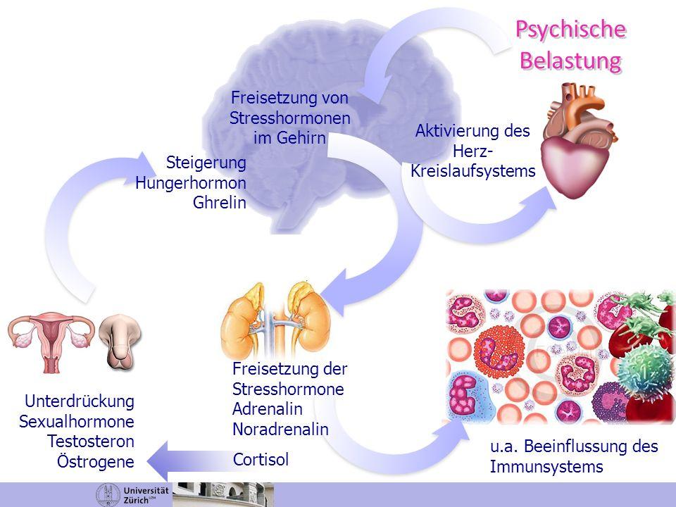 Psychische Belastung Psychische Belastung u.a. Beeinflussung des Immunsystems Freisetzung der Stresshormone Adrenalin Noradrenalin Aktivierung des Her