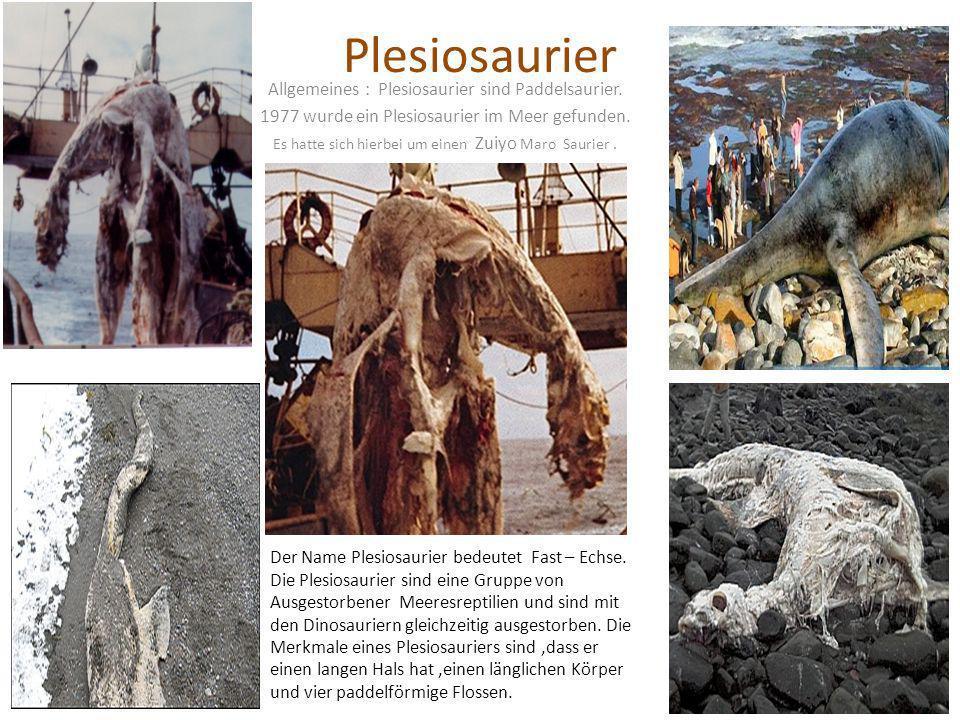 Plesiosaurier Allgemeines : Plesiosaurier sind Paddelsaurier. 1977 wurde ein Plesiosaurier im Meer gefunden. Es hatte sich hierbei um einen Zuiyo Maro