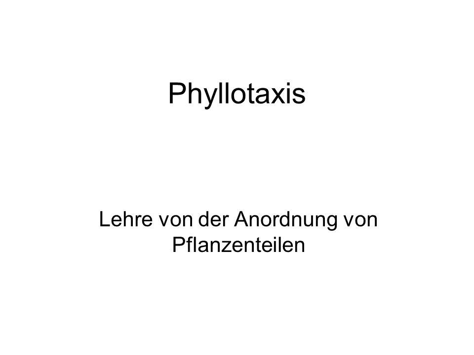 Phyllotaxis Lehre von der Anordnung von Pflanzenteilen