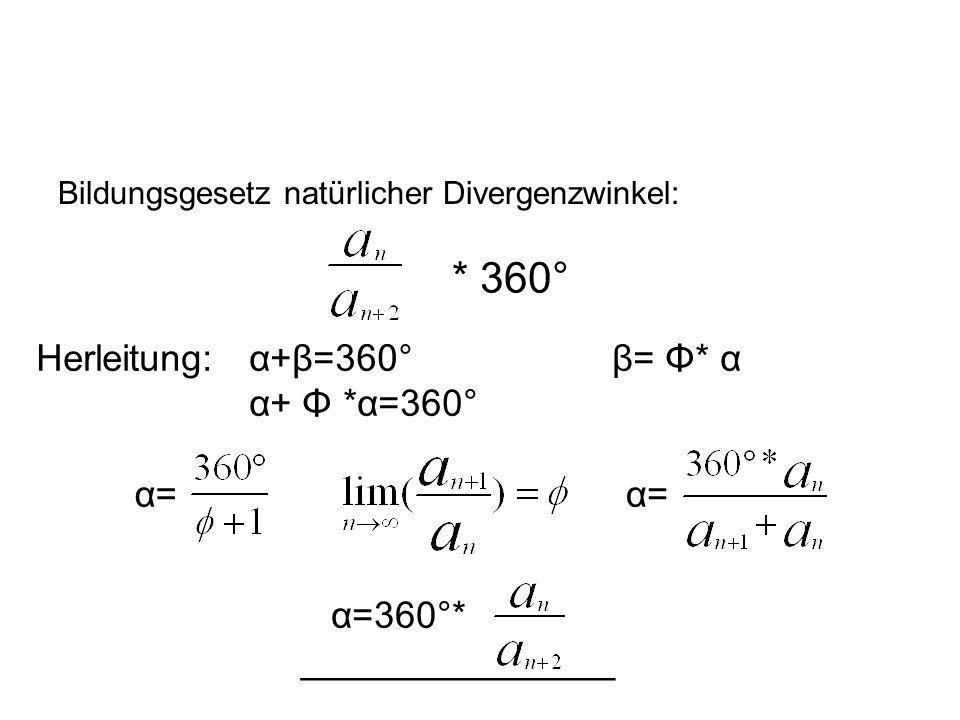 Bildungsgesetz natürlicher Divergenzwinkel: * 360° Herleitung: α+β=360°β= Φ* α α+ Φ *α=360° α= α=360°* _______________