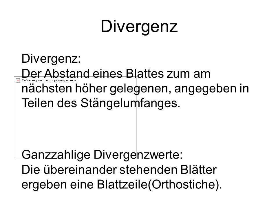 Divergenz Divergenz: Der Abstand eines Blattes zum am nächsten höher gelegenen, angegeben in Teilen des Stängelumfanges. Ganzzahlige Divergenzwerte: D