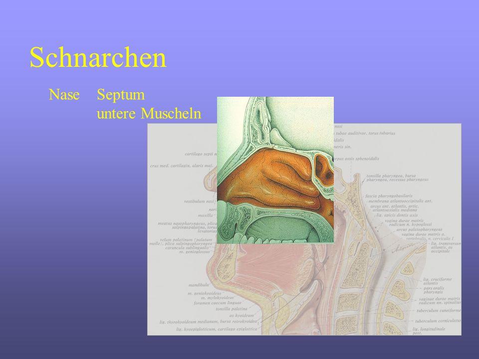 Schnarchen NaseSeptum untere Muscheln