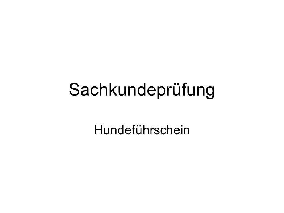 Rangordnungsphase Dauer: von der 13.- 16.