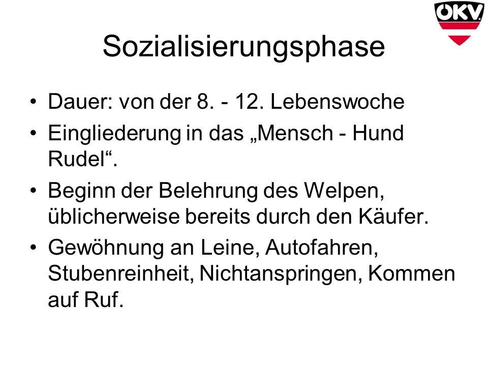 Sozialisierungsphase Dauer: von der 8. - 12. Lebenswoche Eingliederung in das Mensch - Hund Rudel. Beginn der Belehrung des Welpen, üblicherweise bere