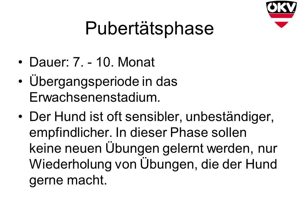 Pubertätsphase Dauer: 7. - 10. Monat Übergangsperiode in das Erwachsenenstadium. Der Hund ist oft sensibler, unbeständiger, empfindlicher. In dieser P