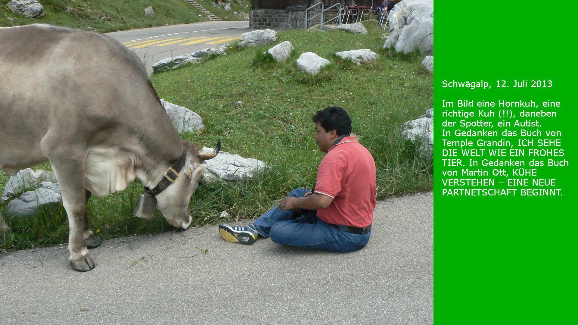 Schwägalp, 12. Juli 2013 Im Bild eine Hornkuh, eine richtige Kuh (!!), daneben der Spotter, ein Autist. In Gedanken das Buch von Temple Grandin, ICH S