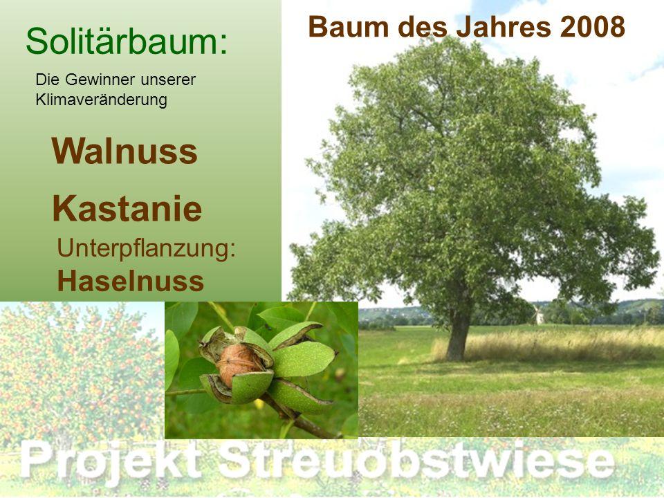 Solitärbaum: Walnuss Kastanie Unterpflanzung: Haselnuss Die Gewinner unserer Klimaveränderung Baum des Jahres 2008