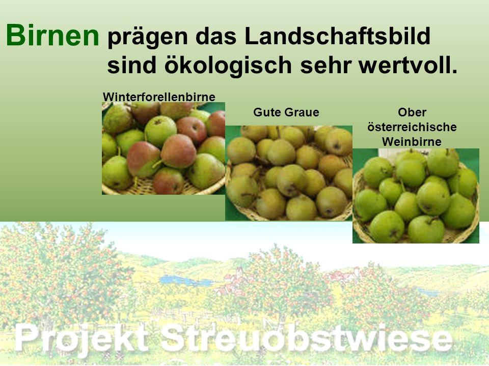 Birnen prägen das Landschaftsbild sind ökologisch sehr wertvoll. Winterforellenbirne Ober österreichische Weinbirne Gute Graue