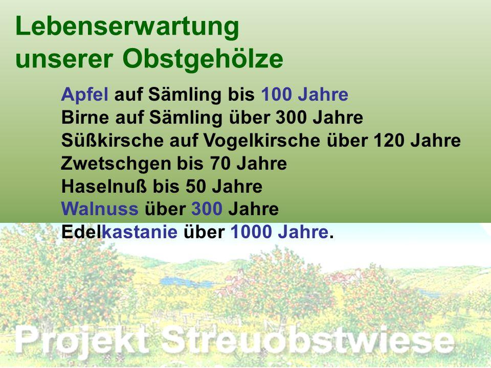 Lebenserwartung unserer Obstgehölze Apfel auf Sämling bis 100 Jahre Birne auf Sämling über 300 Jahre Süßkirsche auf Vogelkirsche über 120 Jahre Zwetsc