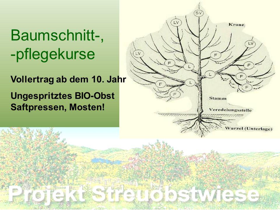 Baumschnitt-, -pflegekurse Vollertrag ab dem 10. Jahr Ungespritztes BIO-Obst Saftpressen, Mosten!